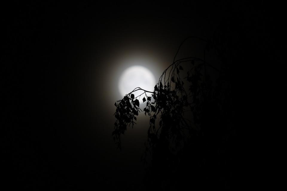 Lune et arbre
